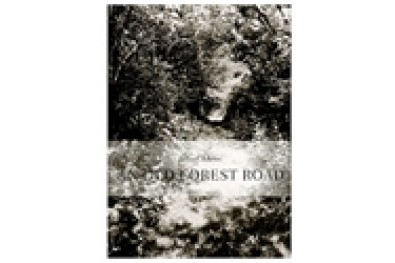 An Old Forest Road
